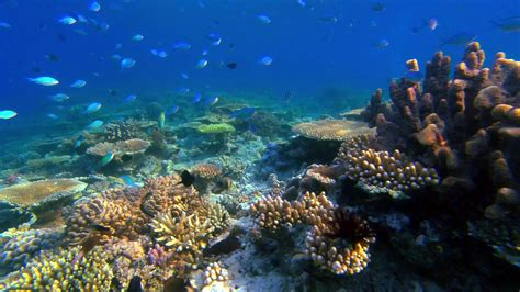 Great Barrier Reef - TheTVDB